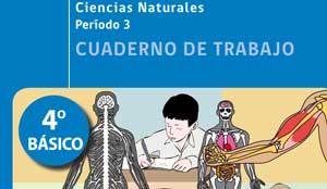 Cuaderno de Trabajo sobre el cuerpo humano