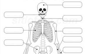Nombre de los huesos del cuerpo humano