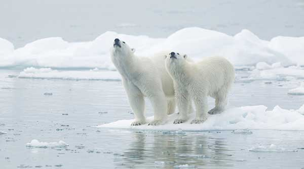 Animales en extinción en el Perú y el Mundo