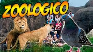 Visita al zoológico