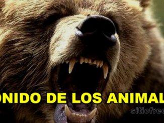 Sonido de los animales